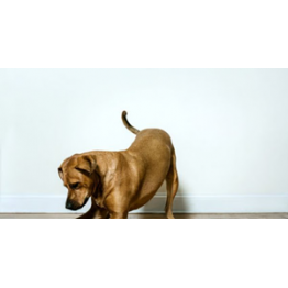 News - 2016042704 - Play 'Fetch' With Your Dog Anywhere In The World